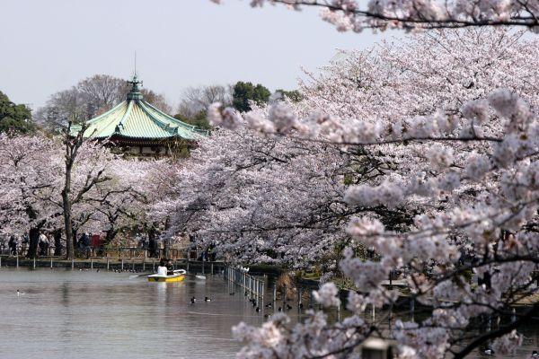 Parc Ueno-Onshi - Tokyo - Japon