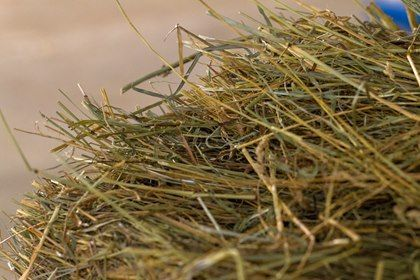 Six Signs of Good-Quality Horse Hay - TheHorse.com | Use these six helpful tips when… https://www.pinterest.com/pin/464926361516586612/