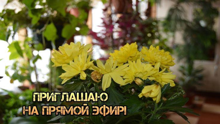 Комнатные растения в марте. Благоприятные дни для работы с растениями.