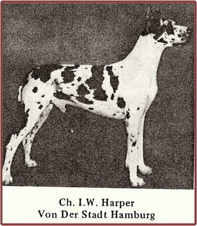 """Born Aug 13, 1957. Breeder: Carl Daniels, Hamburg-Altona. CH I.W. Harper vd Stadt Hamburg was purchased by Toni Pratt of Meistersinger kennels and co-owned with Charles Staiger. Progeny are WAY too numerous to list here, but the one which began my interest in Dane pedigrees was a half brother/sister breeding of  CH I.W. Harper von Stadt Hamburg (CH Amor v Meistersinger x CH Heide von Meistersinger) which produced Bill Miller's Village Squire – the sire of BMW's foundation bitch """"Biche…"""