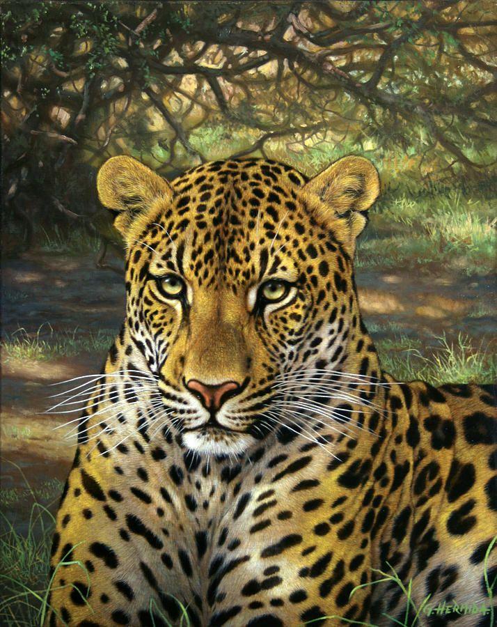 Leopard By Gabriel Hermida Arte Sobre Animais Selvagens