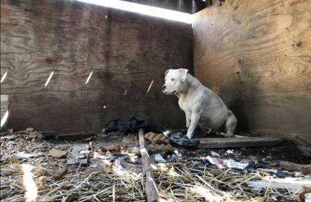 Imagine ficar cinco anos acorrentado(a), sozinho(a), no porão de uma casa abandonado(a). Terrível, não? Mas foi exatamente o que aconteceu com a cadela Treya. Durante este período Treya foi aliment…