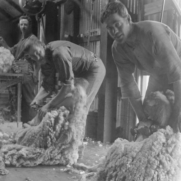 (cute guy) Shearing at a farm near Lake Bolac, Victoria, 1910
