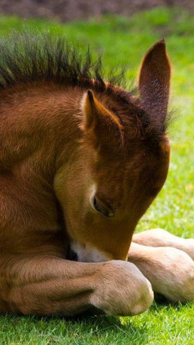 cute baby foals - photo #11