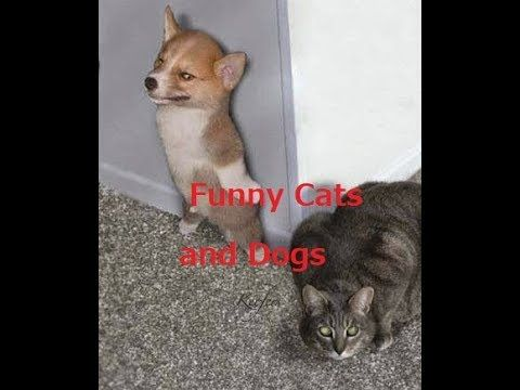 News Videos & more -  Watch the Funniest Videos on youtube - TOP Funny Cat and Dog Try Not To Laugh - Funny videos 2017 Live 24/7 #Funny #videos on #youtube #Music #Videos #News