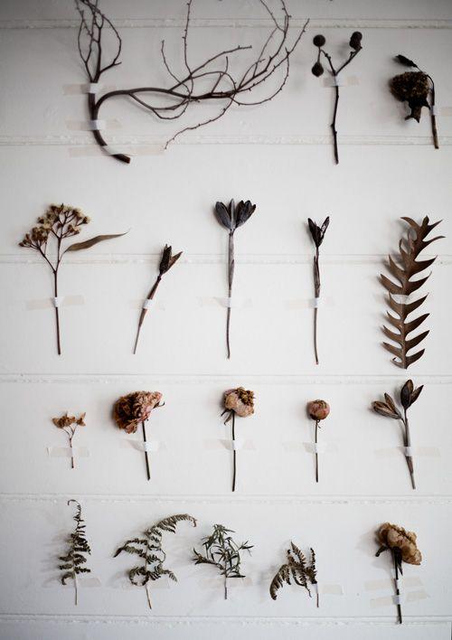 botanica wall