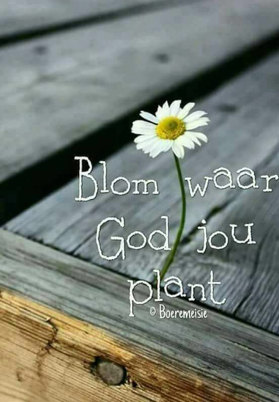 Bloom where God plants you