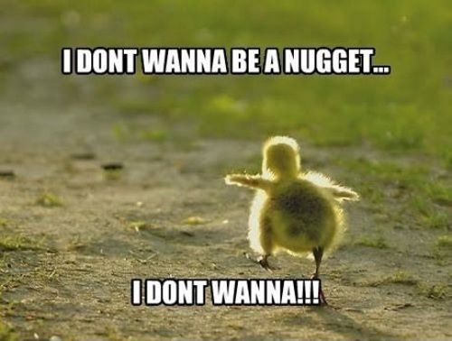 I dont wanna be a nugget funny memes meme funny quote funny quotes humor chicken humor quotes funny pictures chick