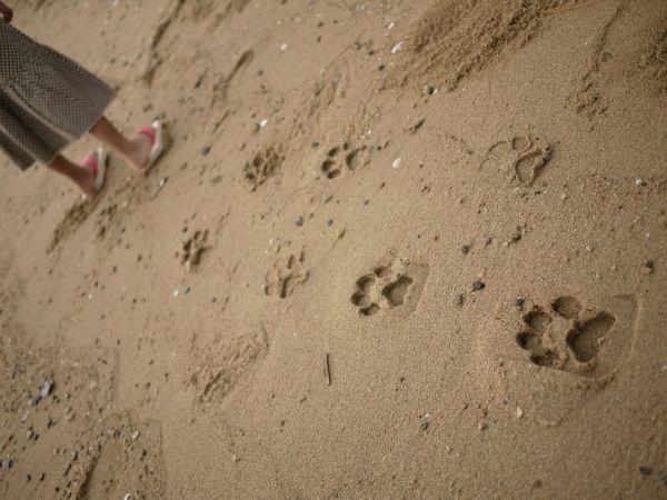 下駄なのもいいし、足跡が可愛いのもいいし、これはぜひプレゼントしたい。大人が履けるサイズもあります。「ashiatoは素足に木のぬくもりを感じながら それぞれの動物になって遊ぶことができます。」\2835