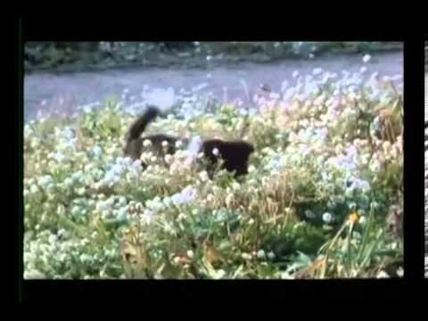 Full film - Heintje in Mein bester Freund.avi