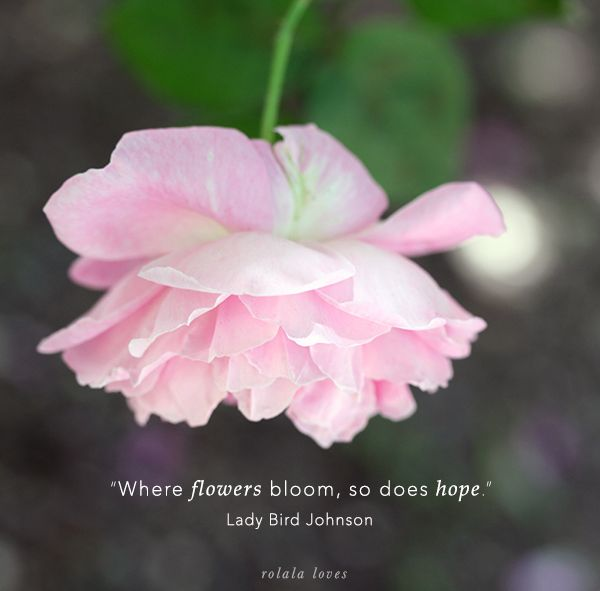 where flowers bloom so does hope I love lady bird's quote: where flowers bloom so does hope and, we take a look over the past week on the blog and catch up with a week at a glance.