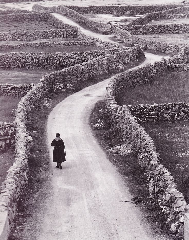 Ireland's stone fences: Ireland's stone fences