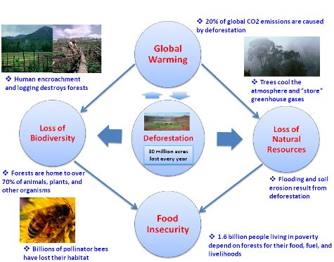 """the disastrous effects of acid rain on man and environment He said the following """"acid rain is a serious problem with disastrous effects  ecosystems and man  following to the environment, -acid rain stops trees."""