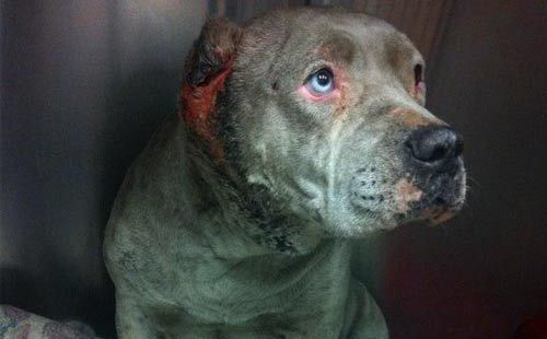Animal Abuse Awareness 10 Handpicked Ideas To Discover