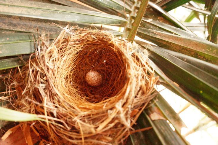 how to keep birds away from balcony