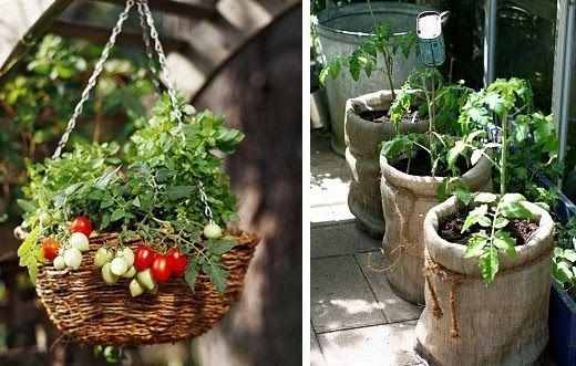 Vysněná zahrada blog o zahradničení