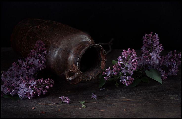 photo: СИРЕНЕВЫЙ НАТЮРМОРТ | photographer: Vladimir Dranitsin | WWW.PHOTODOM.COM