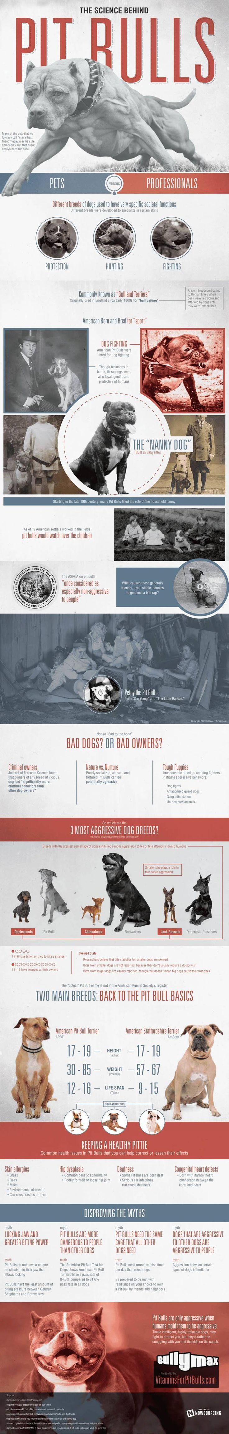 #Pitbulls, are easily the most misunderstood breed of dog. This infographic by nowsourcing.com sheds some light on some common misconceptions about the #pitbull breed.