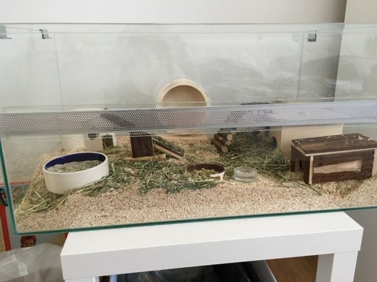 ber ideen zu zwerghamster auf pinterest hamster. Black Bedroom Furniture Sets. Home Design Ideas