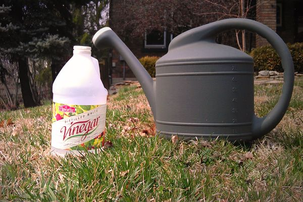 Does organic lawn care really work? http://www.houselogic.com/home-advice/lawns/organic-lawn-care/