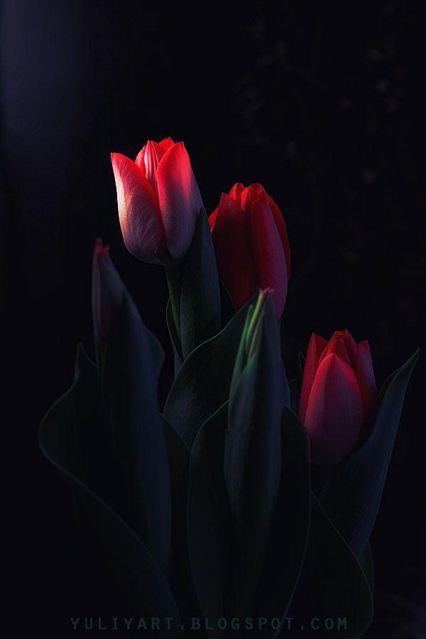 From Yuliyart's Golden Section blog: PLENTY of inspiration!