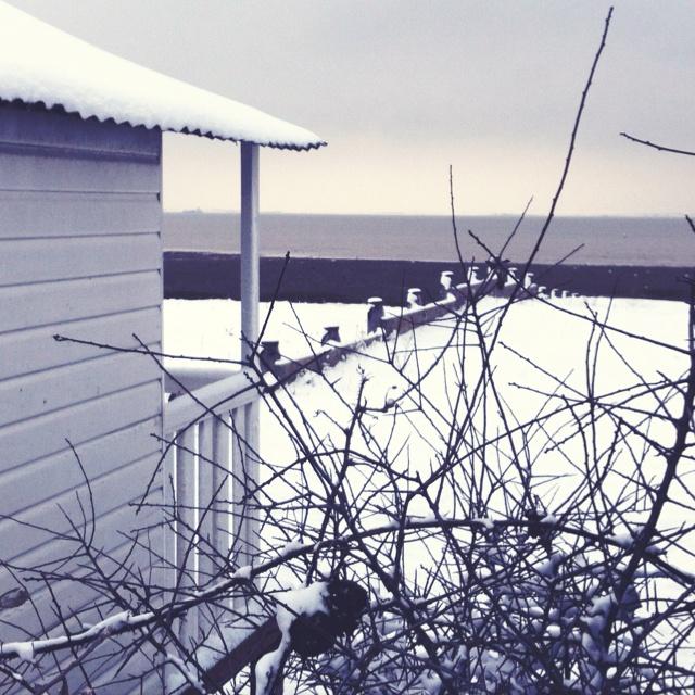 Greys - Beach hut - Seasalter - Whitstable - Kent