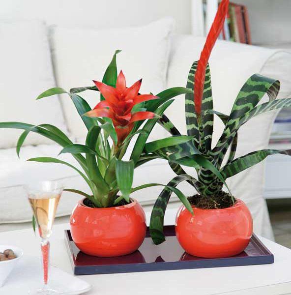 Japanese Garden Indoor: 1000+ Ideas About Indoor Cactus Garden On Pinterest