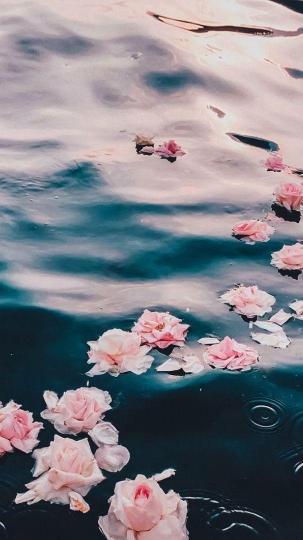 Flowers Water Video In 2020 Flower Phone Wallpaper Flowers Wallpaper