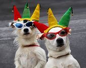 You enter your dog into every imaginable costume contest out there in an effort to win booty for Fido and to get in a little camera time!  If the prize includes a Doodie Pack- you sign your friends up!