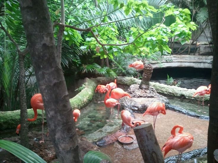Dallas World Aquarium, Texas