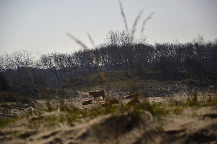Kennemer duinen