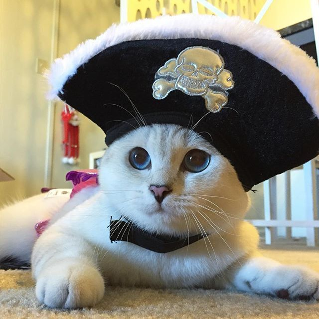 17 Best Images About Pins For Pets On Pinterest: 17 Best Halloween For Pets Images On Pinterest