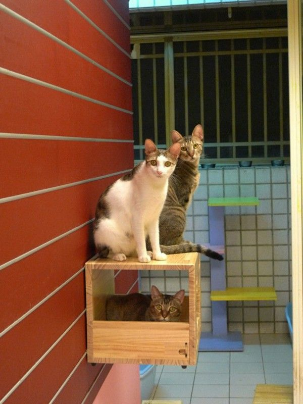 Cat climbing wall box with holes