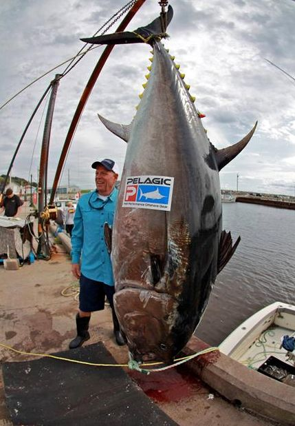 2730 best images about fishing on pinterest fishing for Tuna fish size