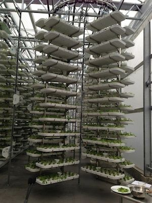 Vertical farming in a Vancouver car park!