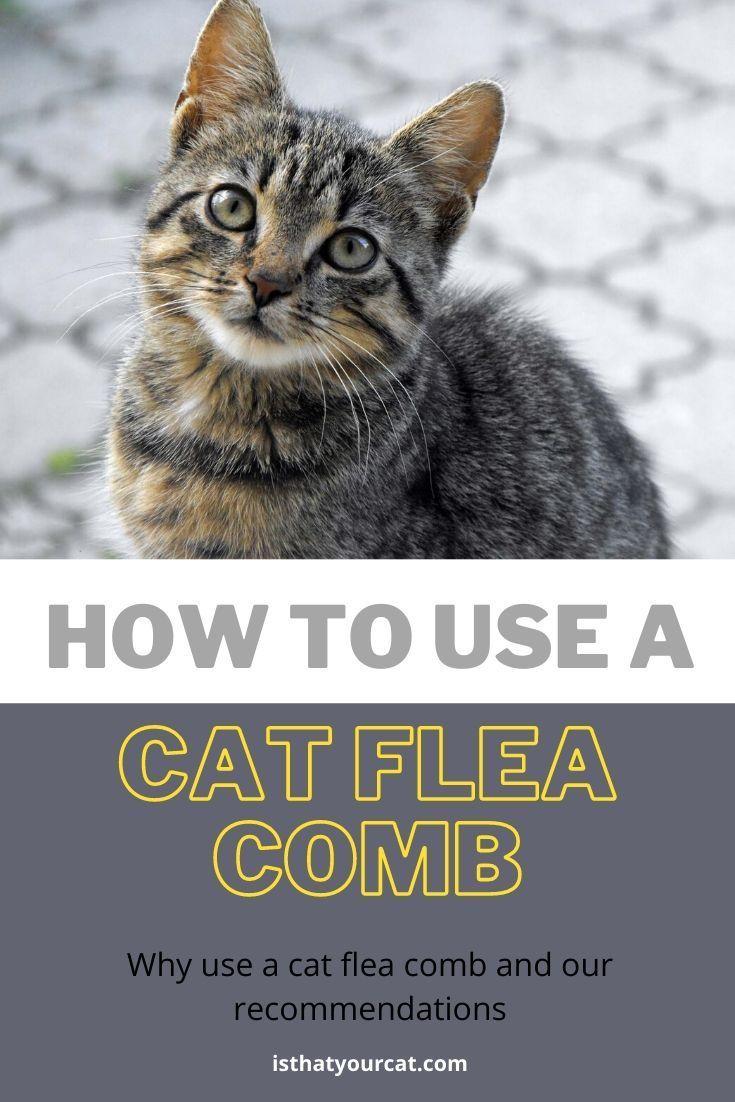How To Use A Cat Flea Comb In 2020 Cat Fleas Fleas Diy Dog Stuff
