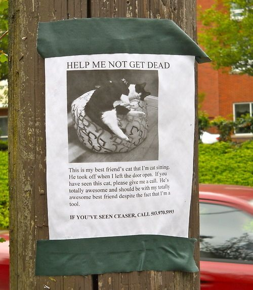 The 25 best Lost cat poster ideas – Make a Missing Poster
