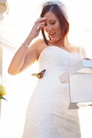 A tale of the bride and the butterfly