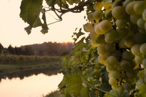 Colli Euganei - Inconfondibile, ha il colore caldo dei tramonti e il profumo fruttato dei pendii veneti. www.decantour.it