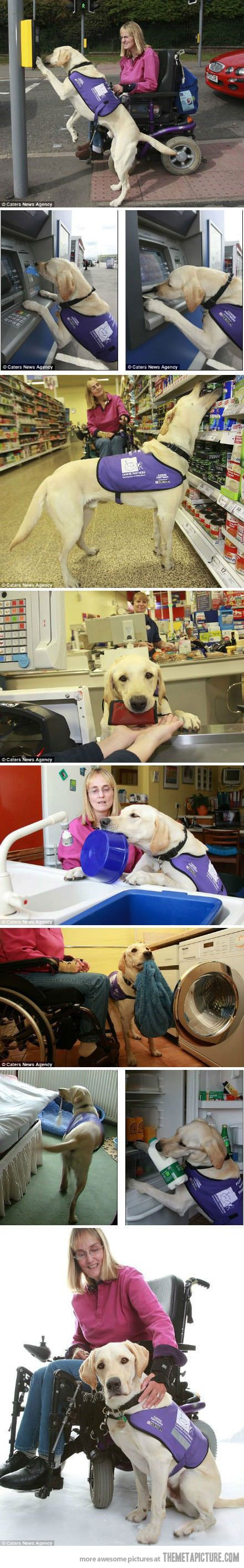 These dogs are amazing.  I am proud to have a retired assistance dog.