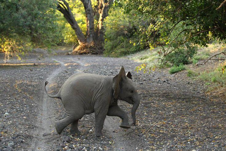 """""""Wenn es keine Elefanten gäbe, könnte man keine erfinden"""": Sechs inspirierende Zitate über Elefanten – Elefanten"""