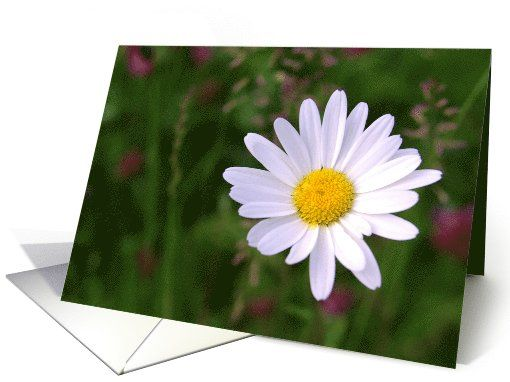 Open my heart white daisy - flowers plants blank note card by steppeland