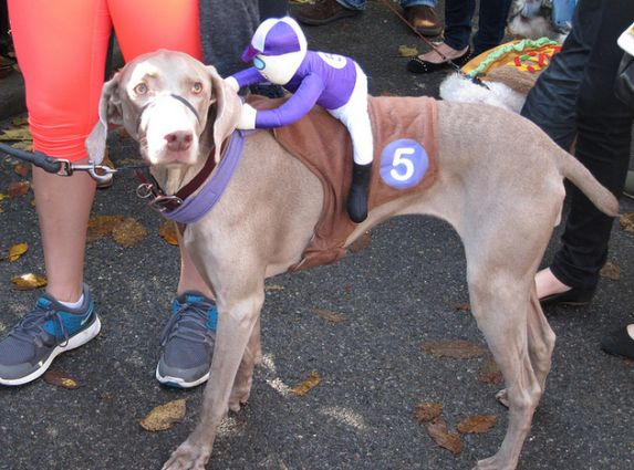 Dog / Racehorse - 20 Incredibly Cute Halloween Pet ...