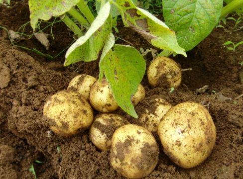 野菜の種まき(植え付け)カレンダー
