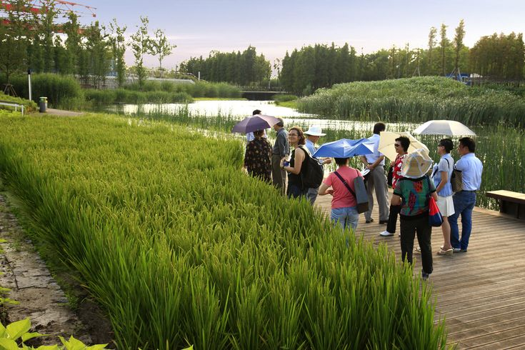 Galería de Parque Houtan en Shanghai / Turenscape - 30