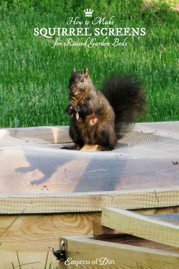1440 best ideas about empress of dirt blog on pinterest - How to keep squirrels away from garden ...