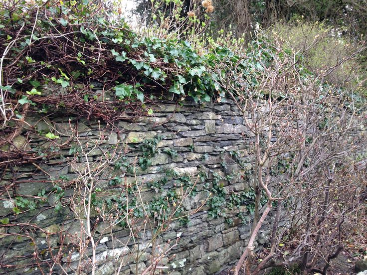 wall overtaken by nature