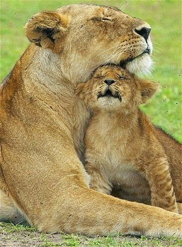 A Lion and Cub