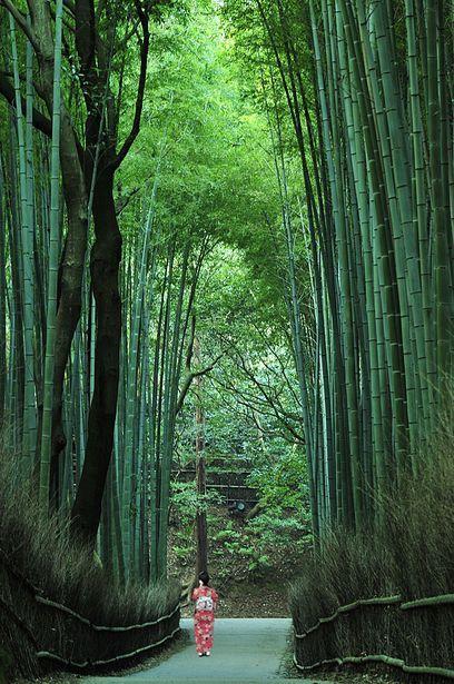 Bamboo Path, Sagano, Kyoto, Japan