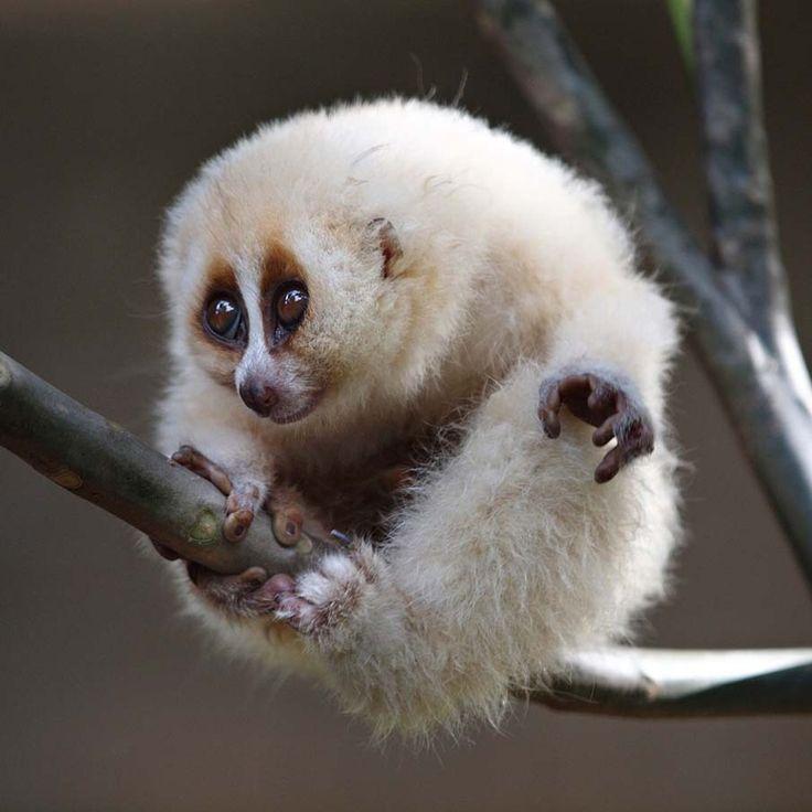 гриффонов выражена фото самого экзотического животного нашей